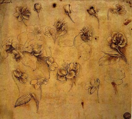 blog da vinci study of roses