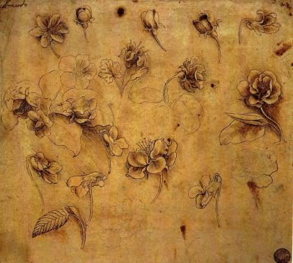 blog da vinci study of roses